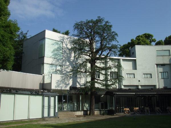 原美術館のヒマラヤスギ